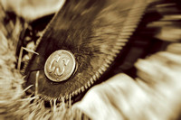 2017CorydBattle147044-Edit
